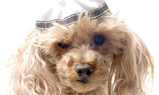 'Bark' Mitzvah for dogs trend persists